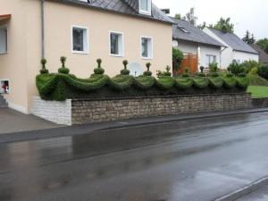 Ligusterhecke gesehen in Bitburg